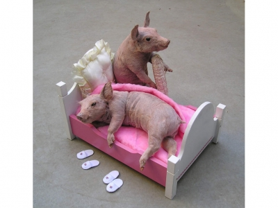 Porci comodi